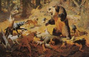 Bear , Close Call , 50-60s