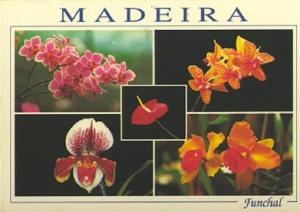 POSTAL 57515: Madeira Funchal Madeira Orchid Farm Quinta dos Saltos