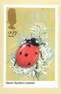 British stamp on Postcard Insects Seven Spotted Ladybird by Gordon Beningfield