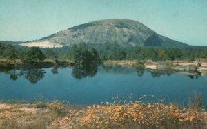 Atlanta, GA, Stone Mountain, Summer Flowers, Chrome Vintage Postcard g8363
