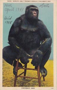 Susie World's Only Trained Gorilla Cincinnati Zoo Cincinnati Ohio