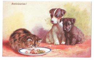 Anticipation Puppies Kitten Food CT Howard Artist Signed Vintage Salmon Postcard