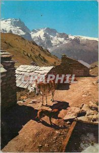 Postcard Modern Hamlet Mountain High Alps in Natural Colors Donkey Donkey Dog