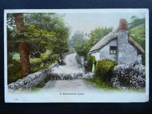 Devon Country Life (1) c1903 Postcard sent to 39 VICTORIA ROAD KENSINGTON LONDON