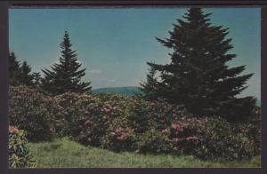 Rhododendron BIN