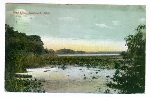 Saugatuck, Michigan to Chicago, Illinois 1911 used Postcard, Pond Lilies