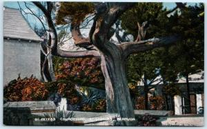 ST. GEORGES, BERMUDA  ~ ST. PETER'S CHURCHYARD  ca 1910s    Postcard