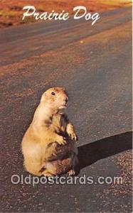 Wyoming, USA Prairie Dog Postcard Post Card Wyoming, USA Prairie Dog