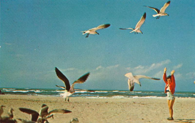 Sea Gull Time - Birds on Florida Sandy Beach (or almost any beach in the US)