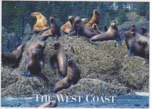 STELLAR SEA LIONS, BC WEST COAST