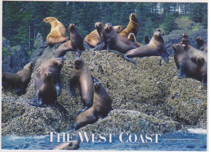 STELLAR SEA LIONS, BC WEST COAST
