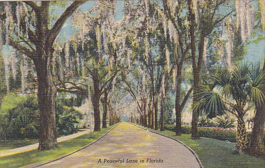 Florida A Peaceful Lane In Florida Curteich