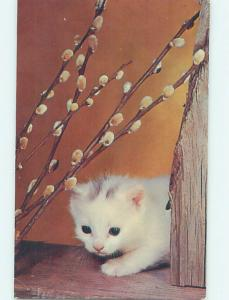 Pre-1980 CUTE KITTEN CAT WITH PUSSYWILLOWS n0392