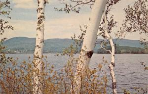 Island Pond Vermont~Town Across Clyde River~Twin Birches~1960s Postcard