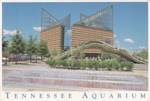 The Tennessee Fish Aquarium Postcard