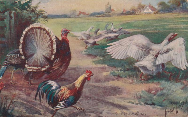Thanksgiving Turkey Greetings ? Geese Trespassers - DB - a/s Ernest Linzell