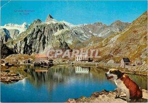 Modern Postcard Pass the great saint Bernado Valais (Switzerland) 2472 m alt Dog