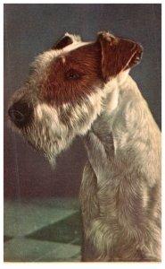 Dog,  Alfred Mainzer