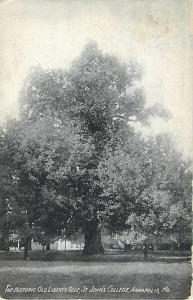 D/B Historic Old Liberty Tree St. John's College Annapolis M