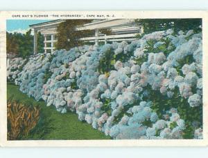 W-Border HYDRANGEA FLOWERS BY HOUSE Cape May New Jersey NJ t7292
