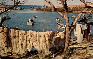 Bermuda St Georges Fishing Nets Hanging Out To Dry 1970