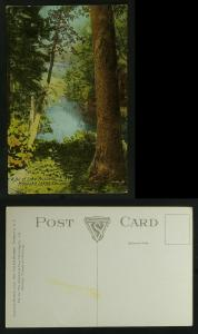 A bit of Lake Rosseau Muskoka, view through trees c 1910
