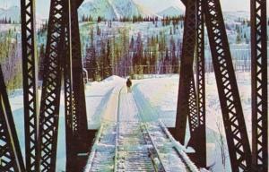 Alaska Moose Ahead Of Train At Mile 288 Honolulu Creek
