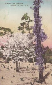 North Carolina Southern Pines Wisteria and Dogwood Trees Handcolored Albertype