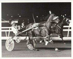 MEADOWLANDS Harness Horse Race , GLEN ALMAHURST winner, July 1984