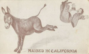 Donkey kick ; Raised in California, 1911