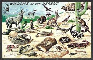 US - Wildlife In Southwestern Desert - [MX-079]