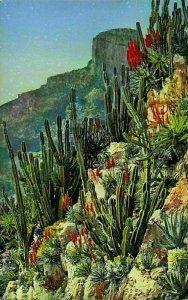 Monaco Jardin Exotique Cereus et Aloes Divers Postcard