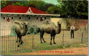 ST. JOSEPH, Missouri Postcard Camels in Krug Park Zoo Scene c1910s UNUSED
