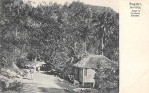 Kingston Jamaica Road to Castleton Gardens Scenic View Antique Postcard J65773