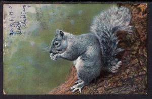 Squirrel BIN