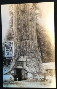 Unused Picture Postcard Redwood Forest California LB