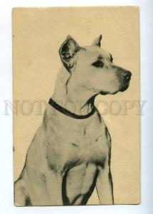 202361 GREAT DANE Dog Vintage postcard