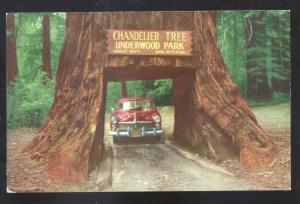 UNDERWOOD PARK REDWOOD HIGHWAY CALIFORNIA DRIVE THRU TREE OLD POSTCARD