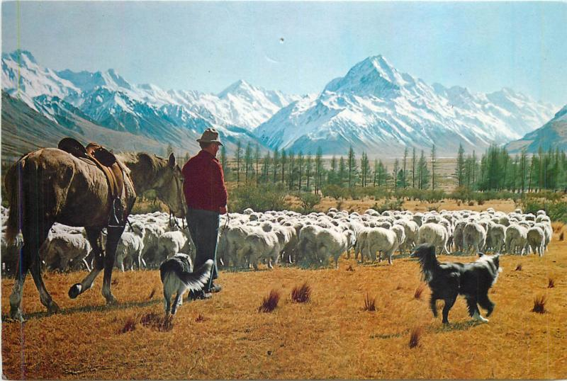 New Zealand Glentanner Station mustering sheep Mt. Cook butterfly stamp