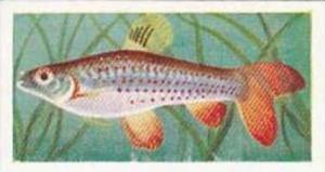 Mitchum Foods Vintage Trade Card Aquarium Fish 1957 2nd Series No 30 Copes Sp...