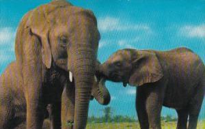 Elephants At North Carolina Zoological Park