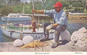 Fisherman With Lobster Bermuda 1956