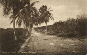 antigua, B.W.I., View on Cedar Hill Estate, Palm Trees (1910s) Postcard