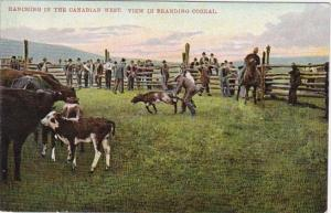 Ranching In The Canadian West View In Branding Corral