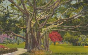 Florida Giant Banyan Tree Curteich