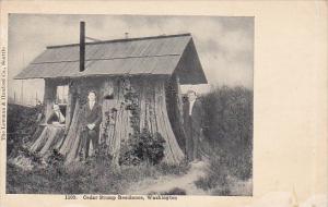 Cedar Tree Stump Residence Washington 1908