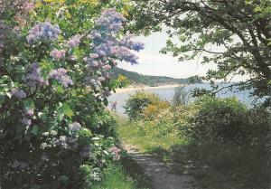 Denmark Bornholm Foraersstemning Blumen Flowers Lake Lac