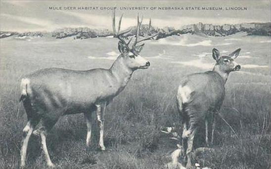 Nebraska Lincoln Mule Deer Habitat Group University Of Nebraska State Museum ...
