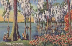 Florida Cypress Gardens Cypress Trees And Knees In Florida