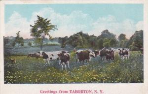 New York Greetings From Taborton 1927